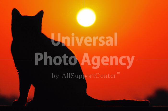 夕日とネコ / ani01-2
