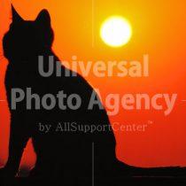 夕日とネコ / ani01-3