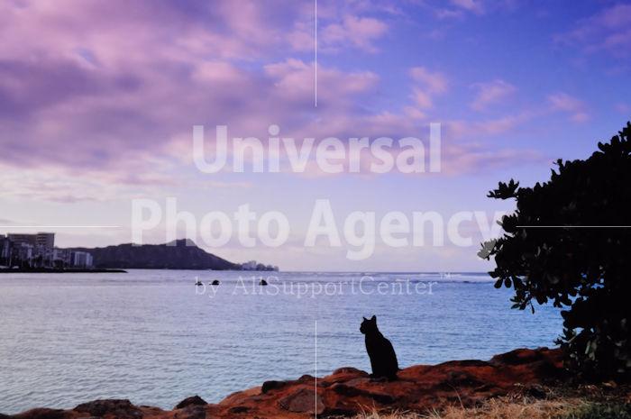 ハワイ オアフ ビーチで黄昏るねこ / ha03-138