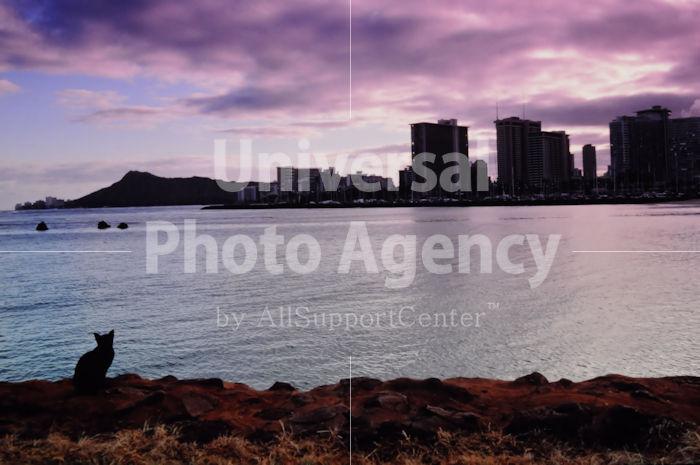 ハワイ オアフ ビーチで黄昏るねこ / ha03-139