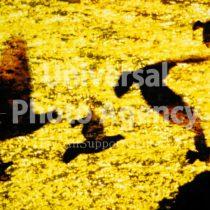 ハワイ 幻想的な鳥たち / hi01-2