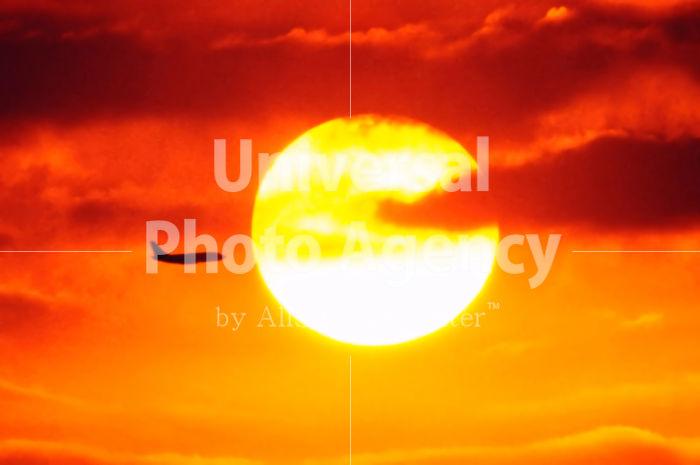 ハワイ 太陽に向かう飛行機 / hi01-6