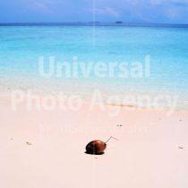 モルジブ イフル島 浜のヤシの実 / mj01-15a