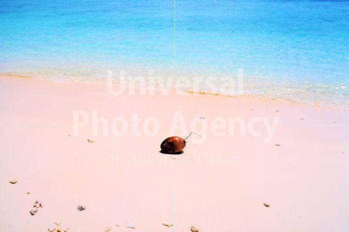 モルジブ イフル島 浜のヤシの実 / mj01-15b