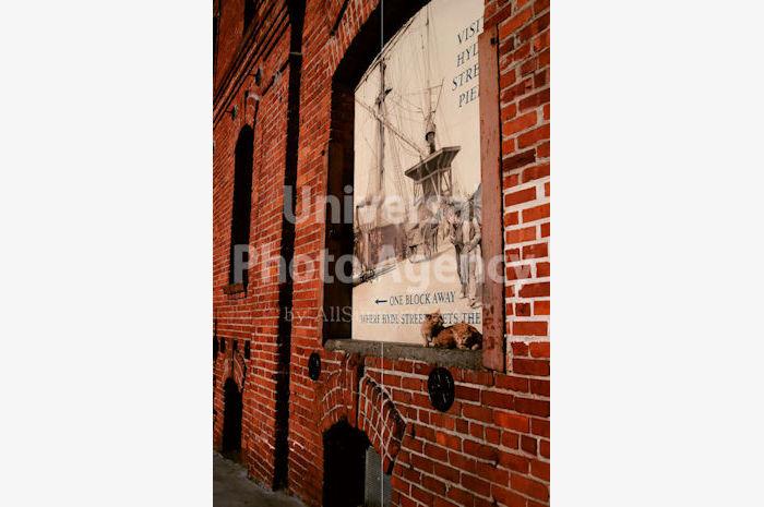 アメリカ サンフランシスコ 壁ねこ / sfcat01-100