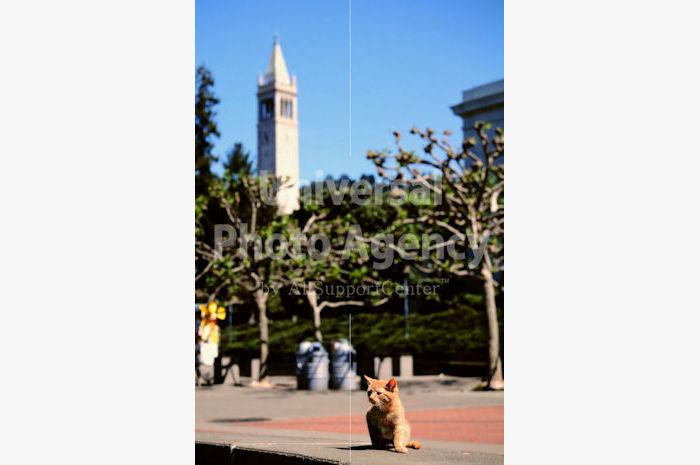アメリカ サンフランシスコ 公園ねこ / sfcat01-105