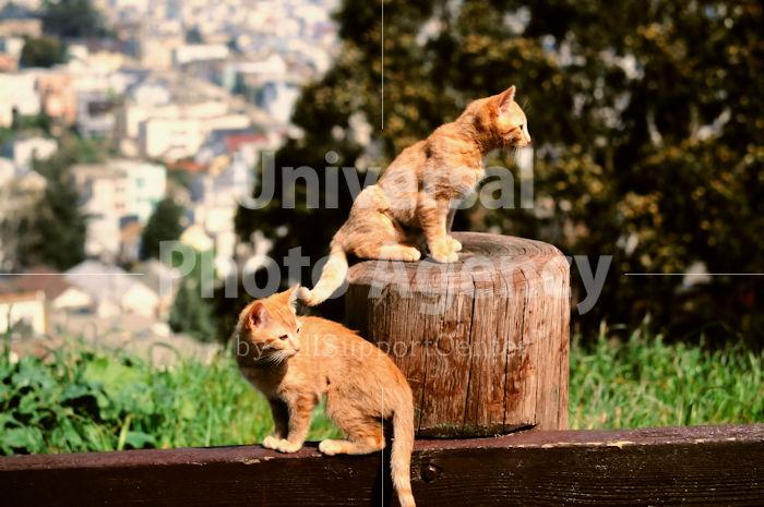 アメリカ サンフランシスコ 塀の淵から・・・ / sfcat01-106
