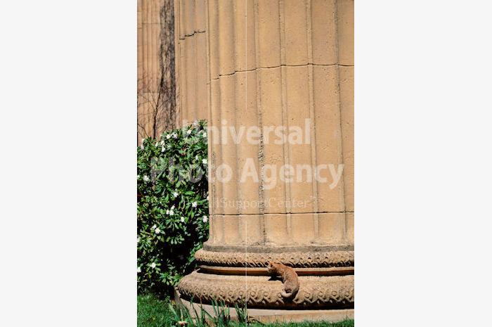アメリカ サンフランシスコ バックの風景に同化するねこ / sfcat01-109