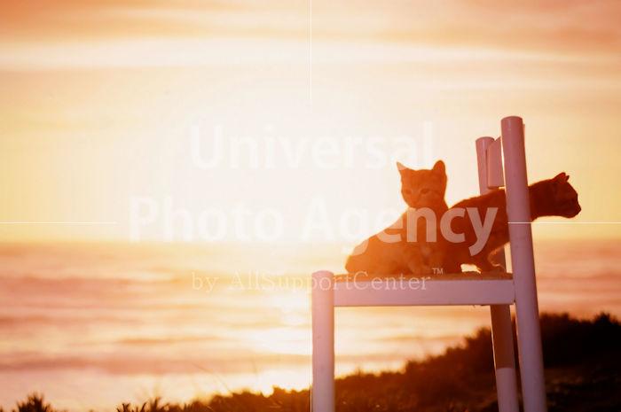 アメリカ サンフランシスコ いすから夕陽をみているねこ / sfcat01-10