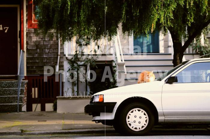 アメリカ サンフランシスコ 車の上のネコ / sfcat01-112