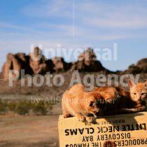 アメリカ 砂漠のねこ / sfcat01-114