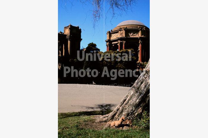 アメリカ サンフランシスコ 木に同化するねこ / sfcat01-116
