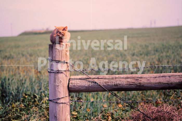 アメリカ サンフランシスコ 草原のねこ / sfcat01-118