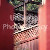 アメリカ サンフランシスコ 塀の片隅からみたねこ / sfcat01-119