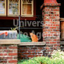 アメリカ サンフランシスコ 玄関の前のねこ / sfcat01-120