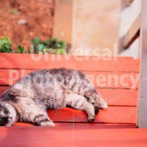 アメリカ サンフランシスコ ベンチの背もたれに寝ている不思議ねこ / sfcat01-122