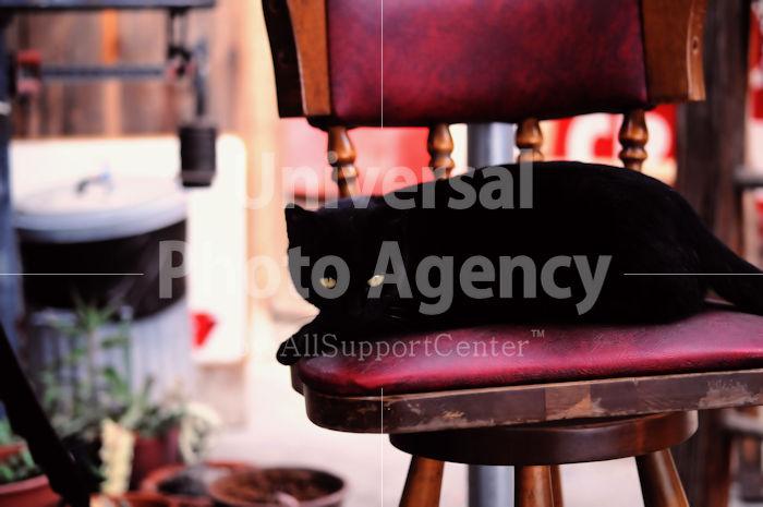 アメリカ サンフランシスコ 椅子の上の黒猫 / sfcat01-123