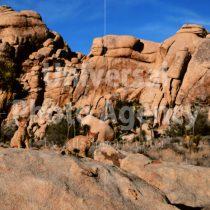 アメリカ 砂漠の風景に同化するねこ / sfcat01-129