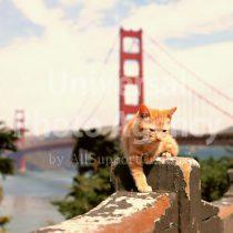 アメリカ サンフランシスコ ゴールデンゲートブリッジとねこ / sfcat01-12