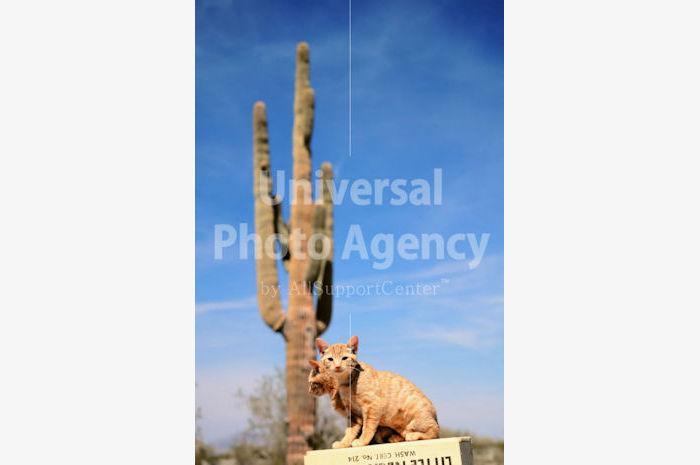 アメリカ 砂漠の箱の上のねこ / sfcat01-130