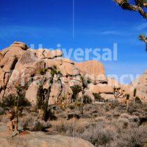 アメリカ 砂漠に同化するねこ / sfcat01-141