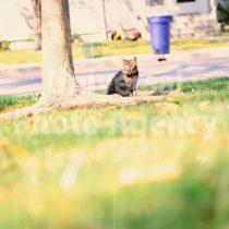 アメリカ サンフランシスコ 木の下で思案中ねこ / sfcat01-144