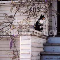アメリカ サンフランシスコ 玄関の前のねこ / sfcat01-146