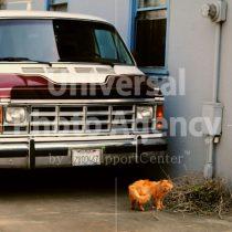 アメリカ サンフランシスコ 車の前のねこ / sfcat01-147