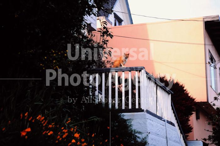 アメリカ サンフランシスコ 同化するねこ / sfcat01-148