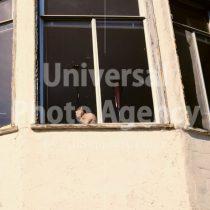 アメリカ サンフランシスコ 窓際ねこ / sfcat01-149