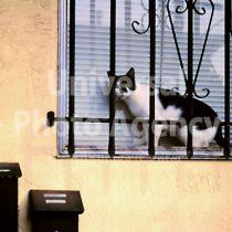 アメリカ サンフランシスコ 窓辺のねこ / sfcat01-14