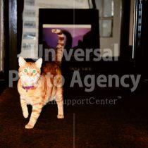 アメリカ サンフランシスコ 呼びかけにこたえるネコ / sfcat01-151