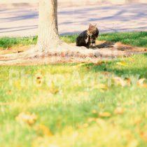 アメリカ サンフランシスコ 木の下で休憩中ねこ / sfcat01-154