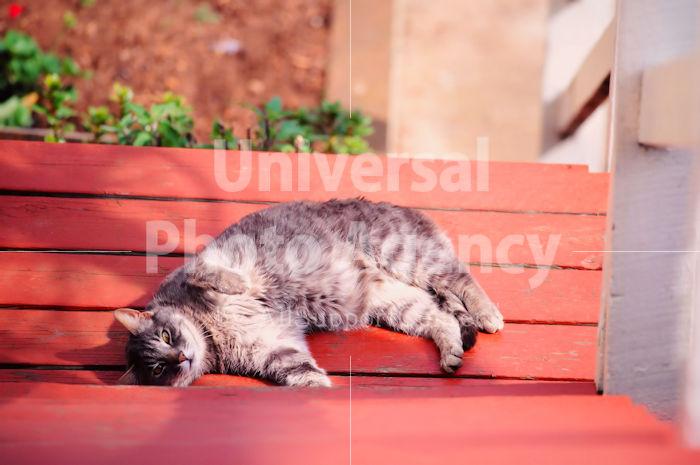 アメリカ サンフランシスコ ベンチの背もたれに寝ている不思議ねこ / sfcat01-157