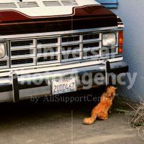 アメリカ サンフランシスコ 車の前のねこ / sfcat01-158