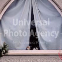 アメリカ サンフランシスコ 窓辺のねこ / sfcat01-159