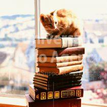 アメリカ サンフランシスコ 本と窓辺のねこ / sfcat01-15
