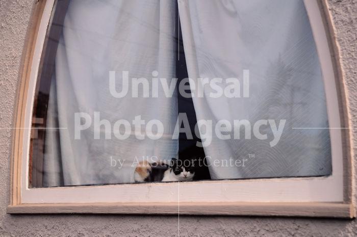 アメリカ サンフランシスコ 窓辺のねこ / sfcat01-160