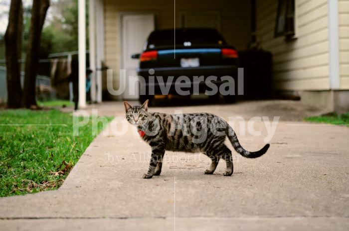 アメリカ サンフランシスコ 自宅の前でよびとめられた猫 / sfcat01-162