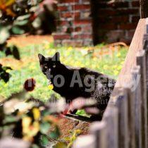 アメリカ サンフランシスコ 庭でびっくりしたねこ / sfcat01-165