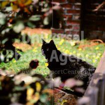 アメリカ サンフランシスコ 獲物を見つけたねこ・・・庭にて / sfcat01-170