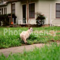 アメリカ サンフランシスコ 知り合いをみつけた猫 / sfcat01-173
