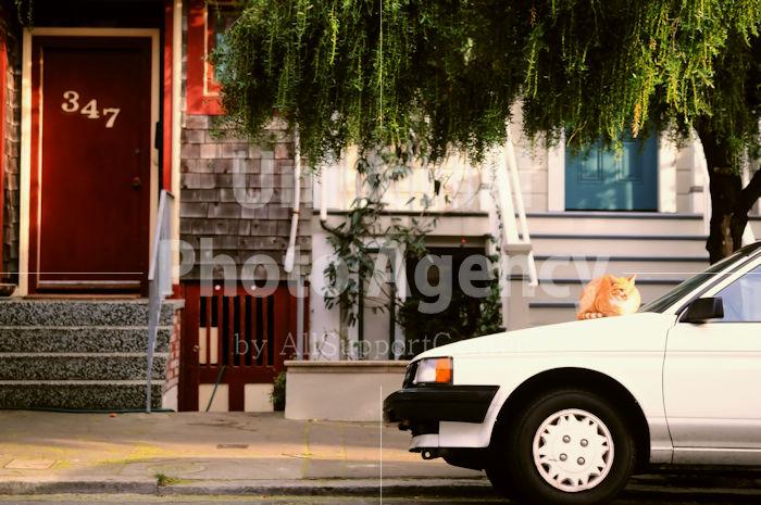 アメリカ サンフランシスコ 車の上のねこ / sfcat01-174