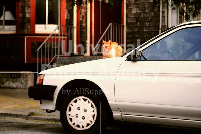 アメリカ サンフランシスコ 車の上のねこ / sfcat01-176