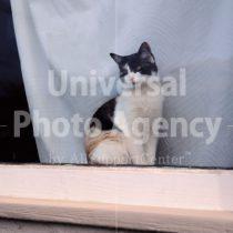 アメリカ サンフランシスコ 窓辺で見つめるネコ / sfcat01-177