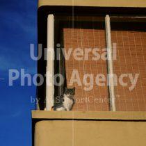 アメリカ サンフランシスコ 空と窓際のねこ / sfcat01-178