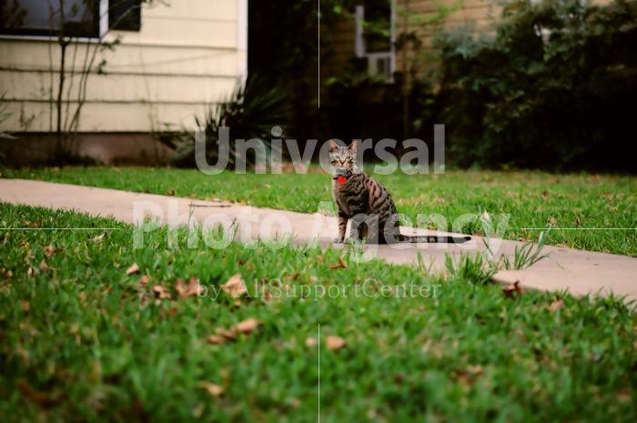 アメリカ サンフランシスコ よばれて考えるネコ / sfcat01-179