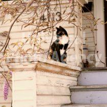 アメリカ サンフランシスコ ふりかえる猫 / sfcat01-180