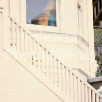 アメリカ サンフランシスコ 窓辺のねこ / sfcat01-184