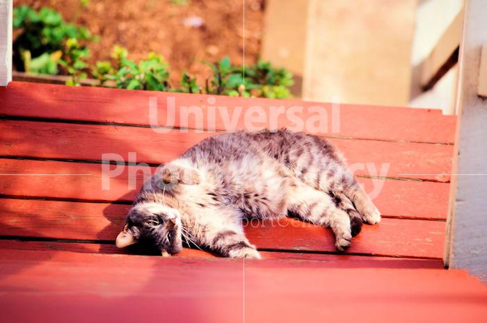 アメリカ サンフランシスコ ベンチの背もたれに寝ている不思議ねこ / sfcat01-185